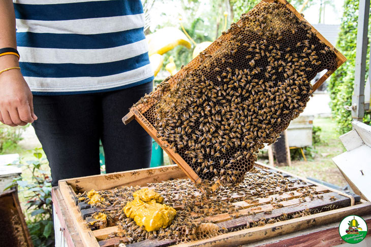 Bee keeping at fruit orchard in Thailand