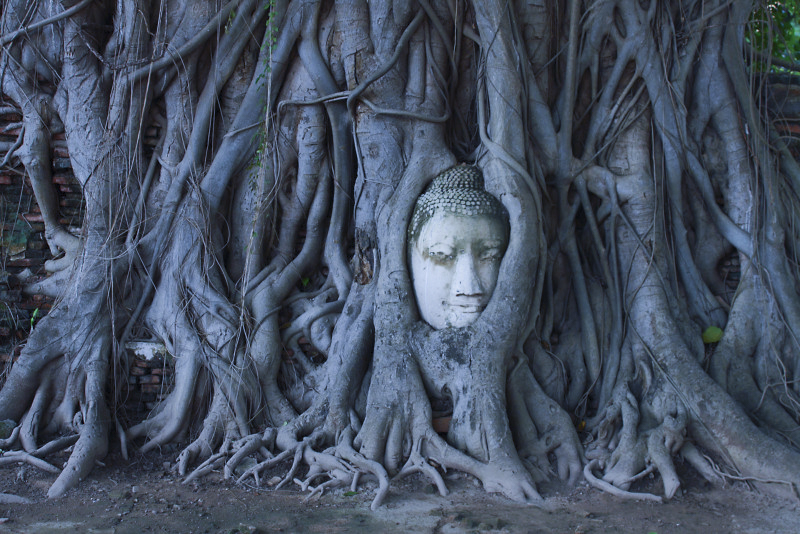 Top 7 Fun Things to Do in Ayutthaya for Travelers