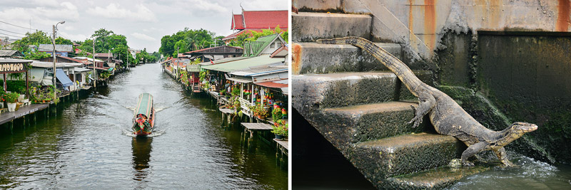 Bangkok Yao Canal & Monitor lizard | Canal tour in Bangkok | Bangkok Food Tours